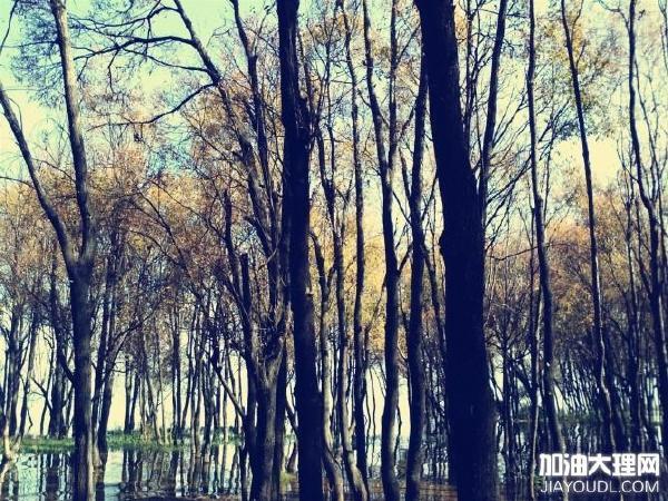 大理小树林——烧烤美景聚会三不误