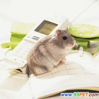 可爱小动物0138; 可爱小仓鼠(二); 鼠 家养宠物鼠
