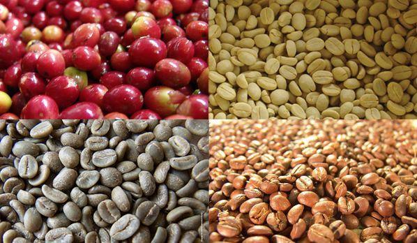 树手工制作豆子