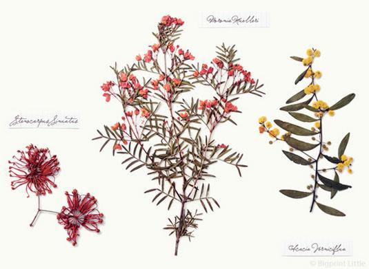 森系水粉植物彩绘图片