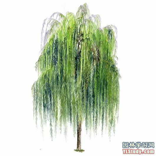 《绘意小报.》 百棵手绘树木