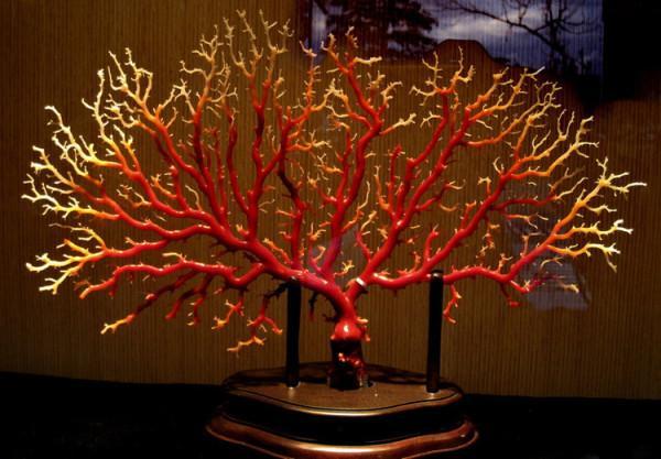 珊瑚简笔画带颜色