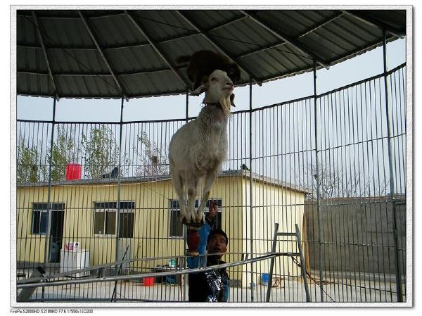节目先后演出于上海野生动物园