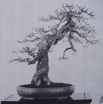 日本植物手绘图谱