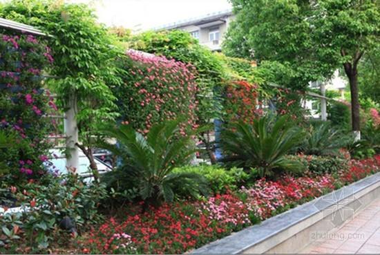 城市街道植物墙设计