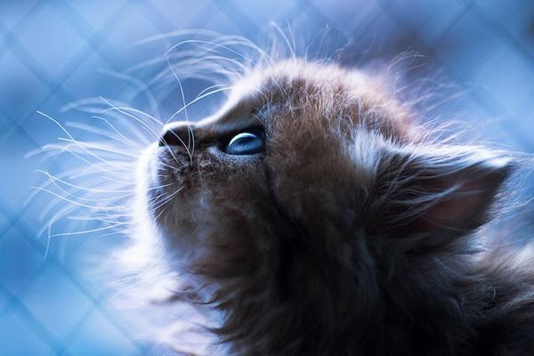 受惊吓的喵星人  一起来看看这个超萌超可爱的小猫