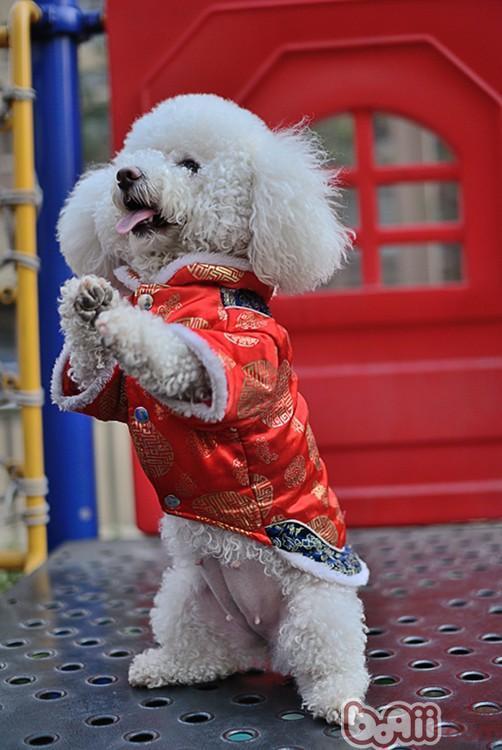 萌狗狗:恭喜发财,红包拿来!