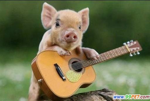 可爱的小猪,这些小猪小到可以托在手掌上