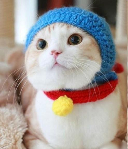 废品手工制作动物 猫