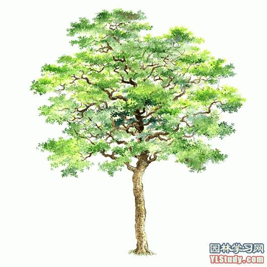 百棵手绘树木 微刊 - 悦读喜欢