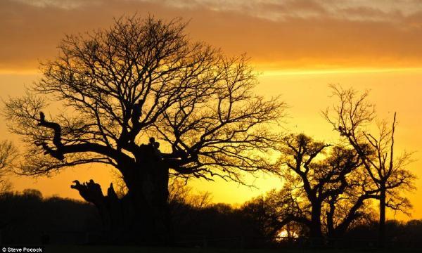 金色天空下树枝的剪影之间