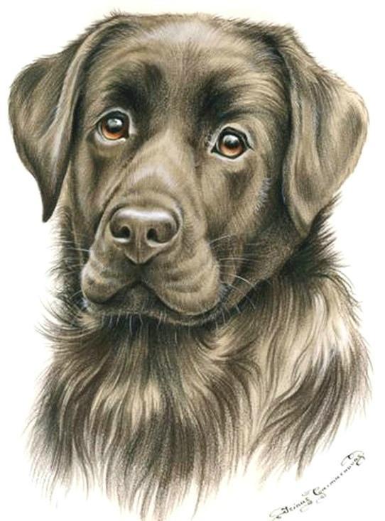 彩色铅笔画-动物绘画欣赏