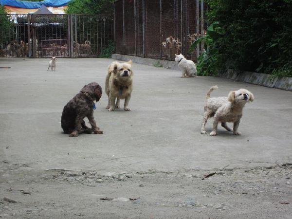 8.12 成都启明小动物保护中心(温江旧基地)